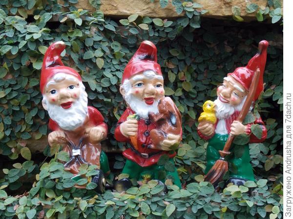 Три веселых гнома и фикус ползучий