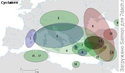 Карта ареалов цикламенов