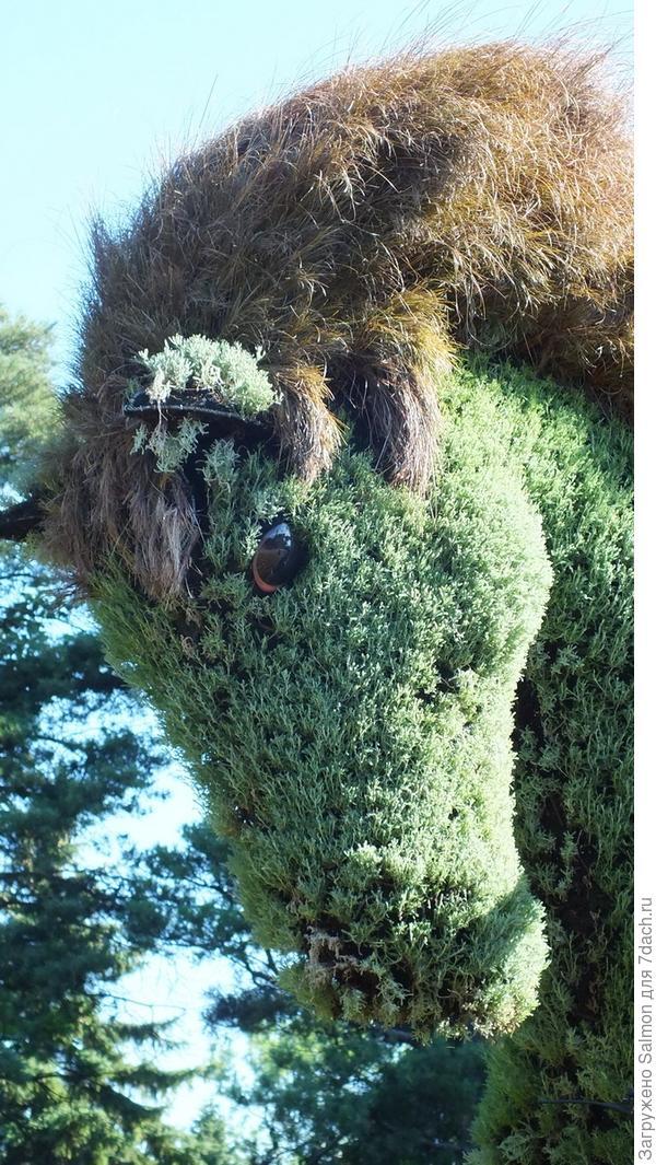 Осока в лошади-скульптуре