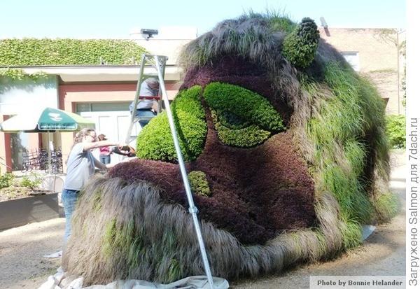 Голова из растений