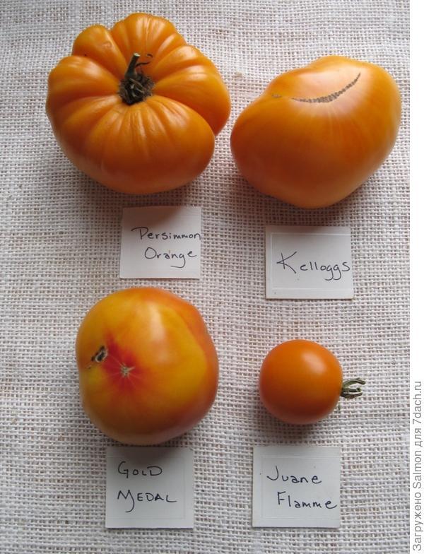 Томаты оранжевые