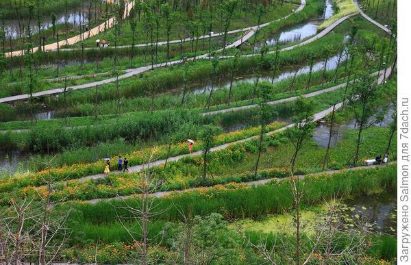 Китайский парк на болоте. Фото с сайта img-fotki.yandex.ru