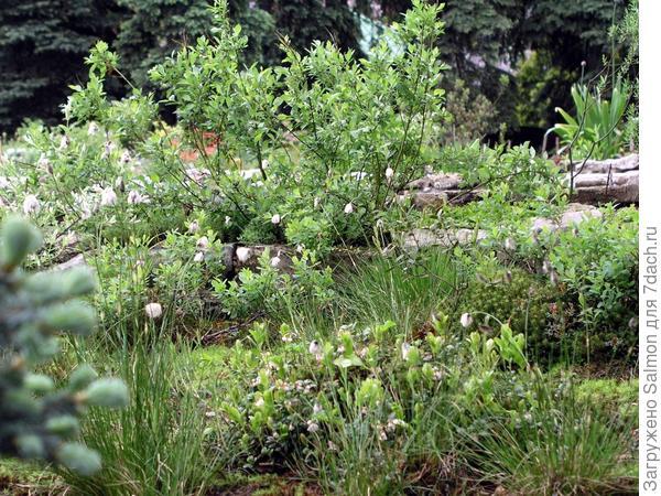 Пермский ботанический сад. Участок Болото. Фото с сайта static.panoramio.com