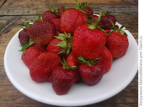 Садовая клубника-самый вкусный привет лета!!!!!