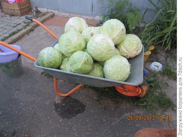 Вывозим всей семьей урожай 2013года!!!