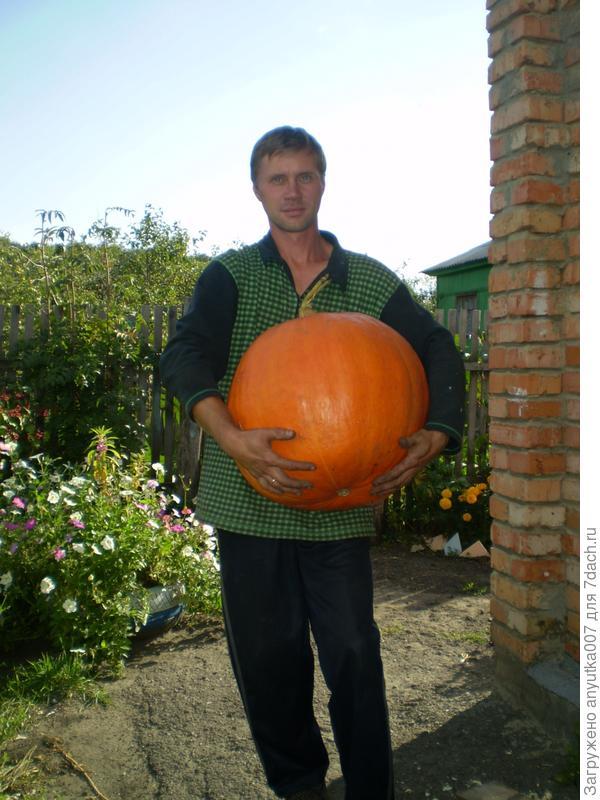 Наша огромная тыква)Весом 30 кг.
