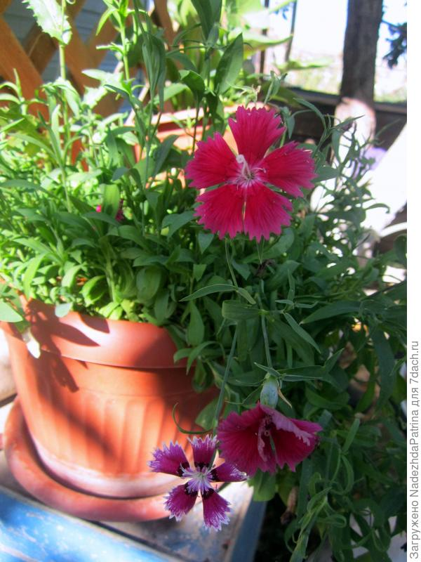 Мой райский сад !!!