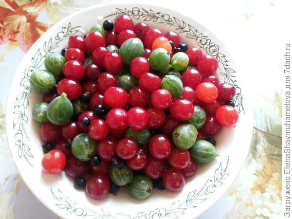 остаток вишни, крыжовник и смородины