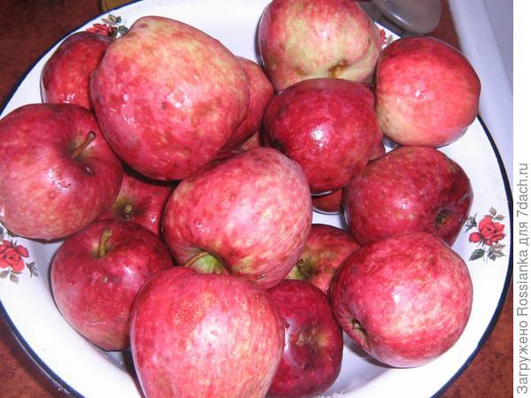 Красивые яблоки зимнего сорта.