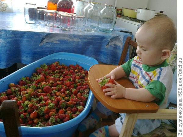 Мой маленький помощник! Выращиваем землянику используя ЭМ технологию. Без химии, без нитратов. Только компост, бактерии и черви. Ну конечно же и с огромной любовью и надежными помощниками!!!