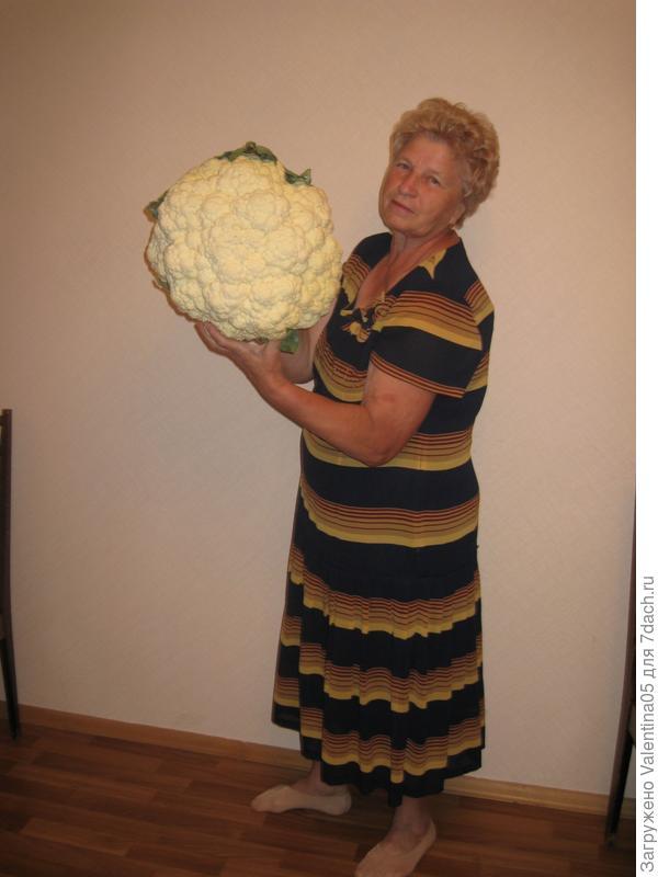 Я и моя цветная капуста-8 кг.