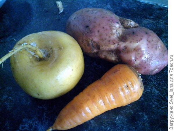 Репка, картофель и морковь.