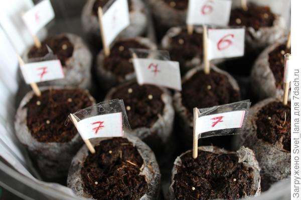 Семена посажены