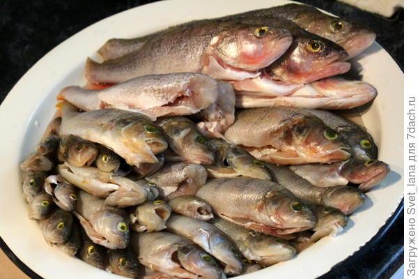 Консервы из мелкой рыбы с маслом в мультиварке. Пошаговый рецепт с фото