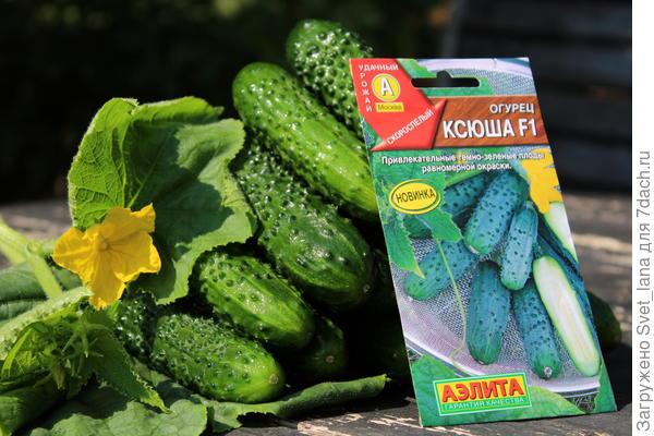 """Огурец 'Ксюша' F1 от """"Аэлиты"""". Свежий и соленый - он всегда зеленый!"""