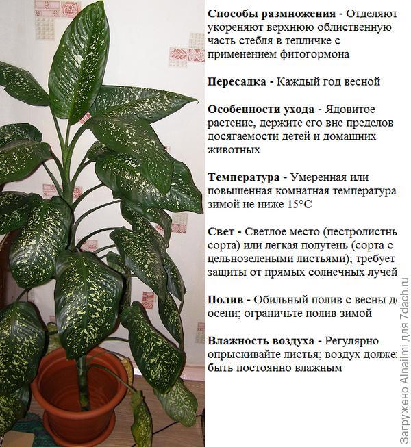 ЦВЕТОК8