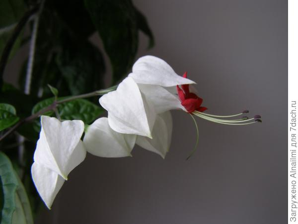 цветок15
