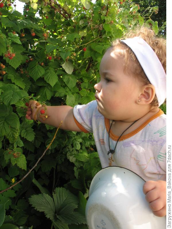 Ксюша собирает малину 1 год и 4 месяца