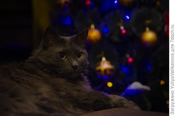 Новогоднее настроение!