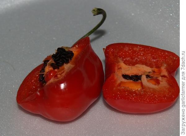 Семена Рокото