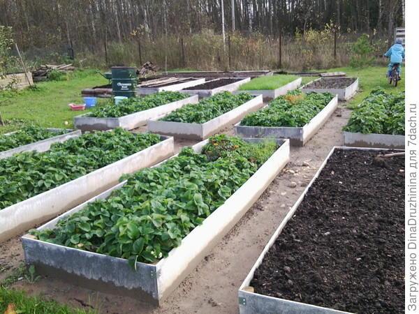 новый вид огорода