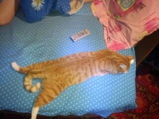 спит как цыплёнок на подложке