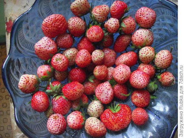 "Ананасная ягода ""Пайнбери"""