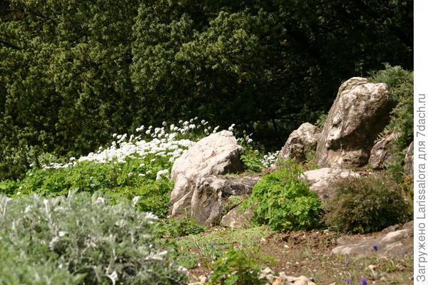 Весенний акцент рокария - статичная группа ибериса вечнозеленого