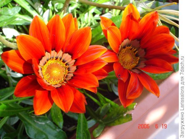 Оранжевая гацания