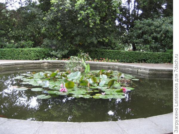 Круглые листья кувшинки гармонируют с формой круглого бассейна