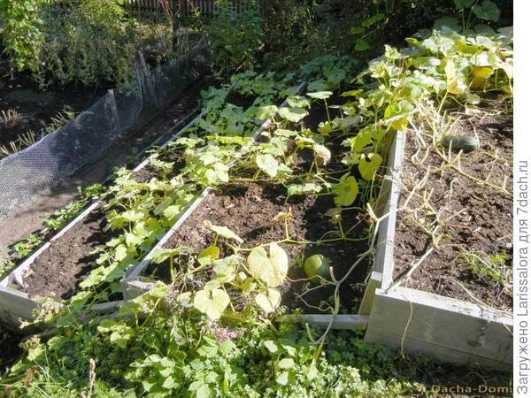 Огород на террасах