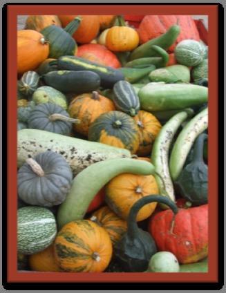 Плоды тыквы и лагенарии