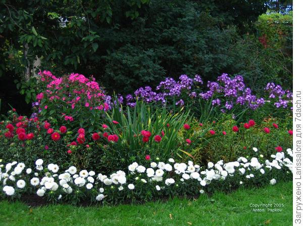 Классический цветник с большим многообразием растений. Фото А. Папкова