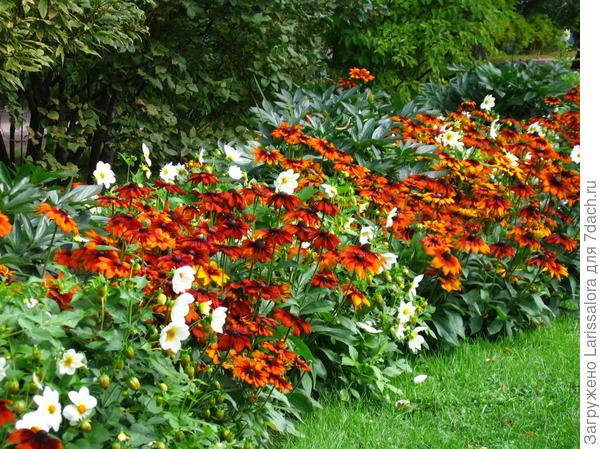 Сажайте цветы, которые вам нравятся. Фото А. Папкова