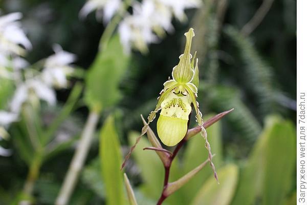 Оригинальная орхидея
