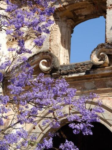 Гватемала цветы Антигуа