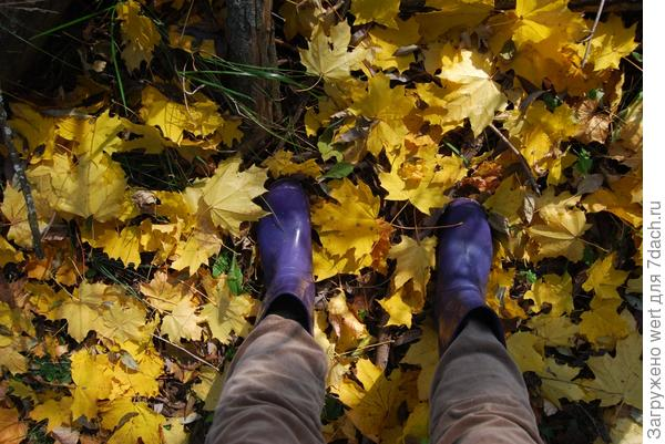Резиновые сапоги на кленовых опавших листьях