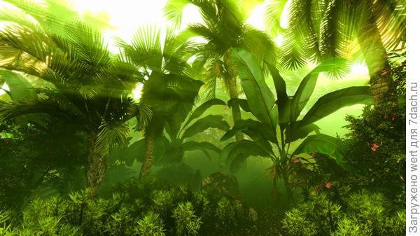 Индийский тропический лес