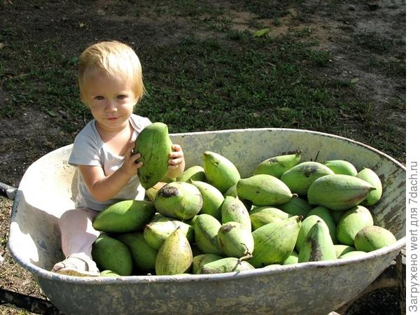 Анета и манго