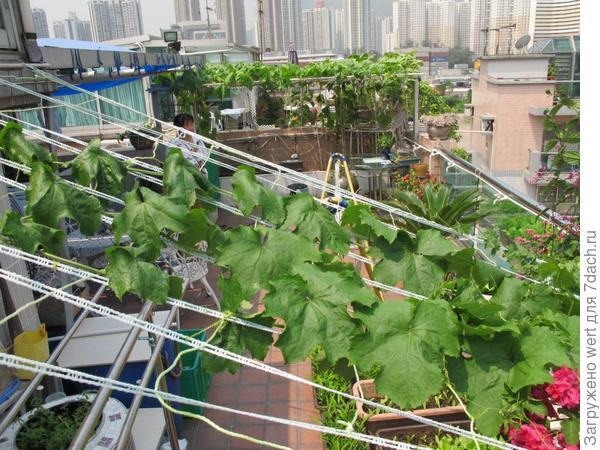 Агро-бизнес в центре Гонконга