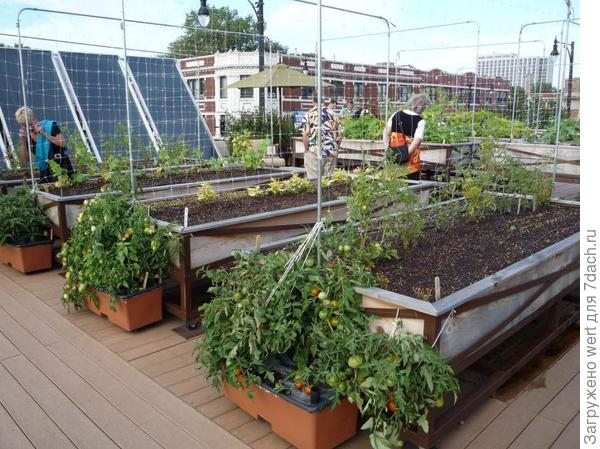 Огород на крыше