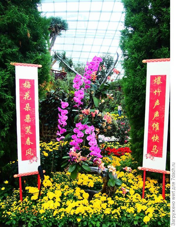 Фото-тур с флористической выставки в Сингапуре