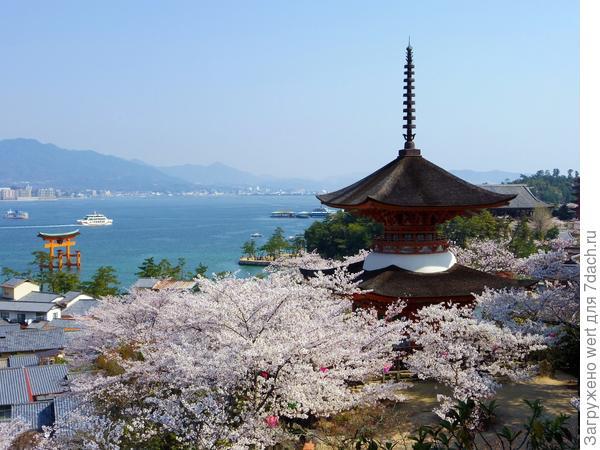 Фестиваль Сакуры в Японии 15 марта 2014 года