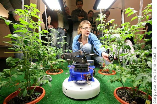 Робот-овощевод