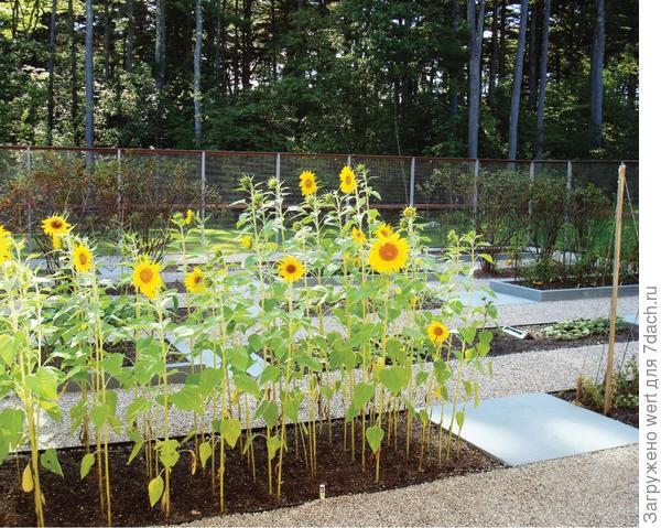 Как адаптировать геометричный огород под маленький участок