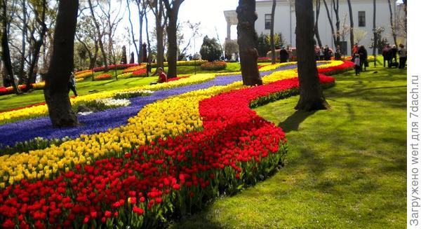 Тюльпаны в парке Стамбула