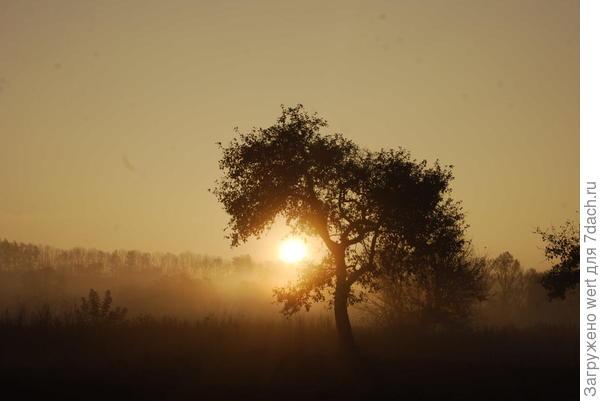 Яблоневый сад на закате