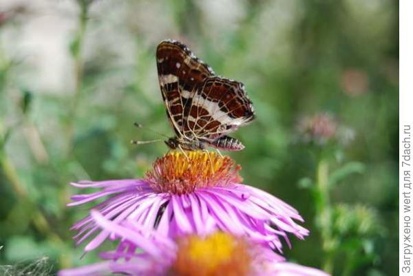 Коричневая бабочка (текстура похожа на мрамор)