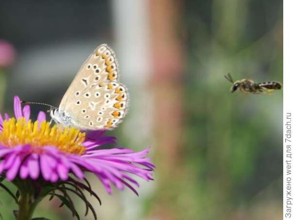 Желтая бабочка с черными пятнами