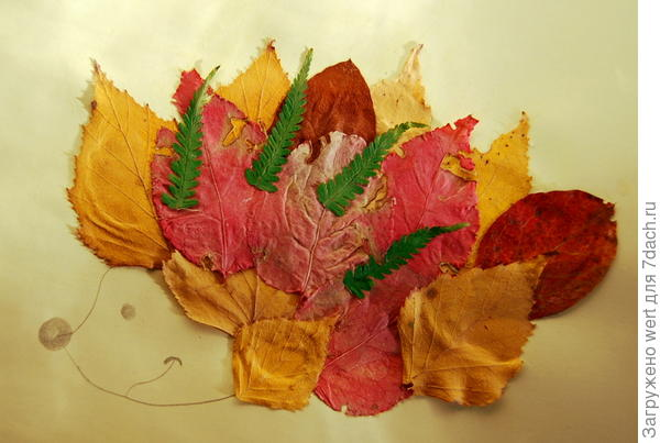 Аппликация из листьев осенних — ёж